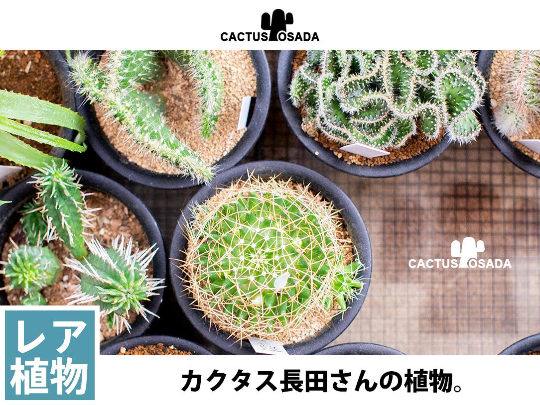 カクタス長田さんの植物