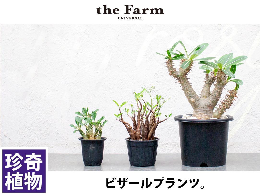 珍奇植物 / ビザールプランツ
